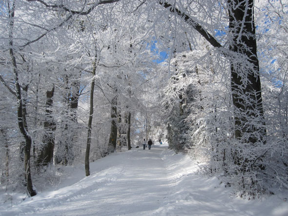 A walk in the winter after snowfall (Switzerland)