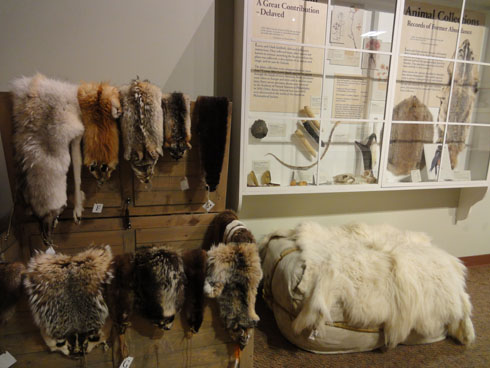 Animal skins at Lewis and Clark Interpretive center