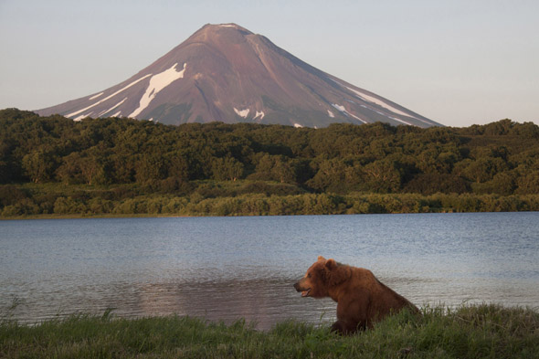 Bear in Kamtchatka - copyright Sommerhalder