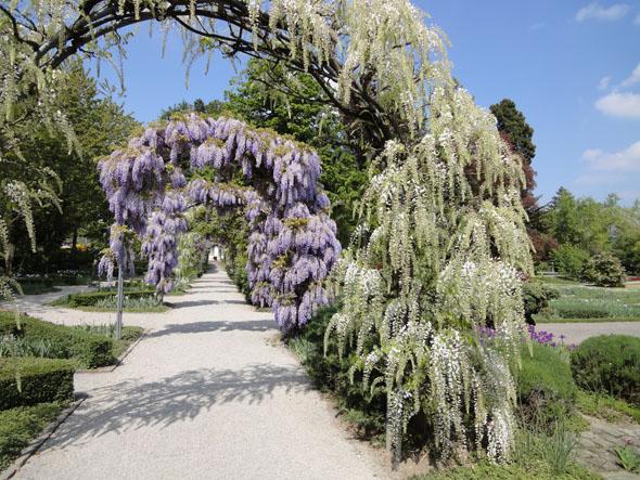 Belvoir Park in the Spring time, Zurich (Switzerland)