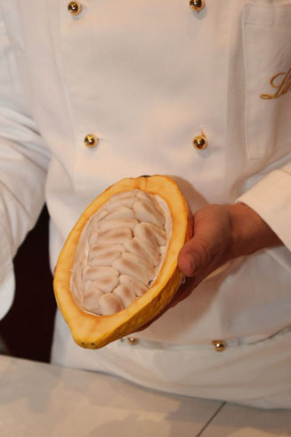 Cacao bean in a Maitre chocolatier's hand