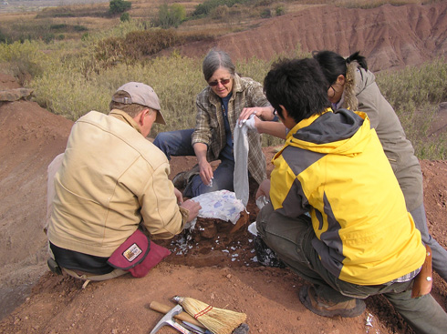 David Varrichio, Frankie Jackson and two Chinese colleagues (from left) jacket a clutch of dinosaur eggs in China - Photo Frankie Jackson