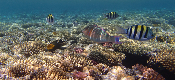 Fish in the Red Sea - Egypt - Copyright Véronique Gray