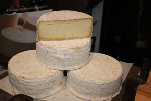 Goat Tomme from Engadin