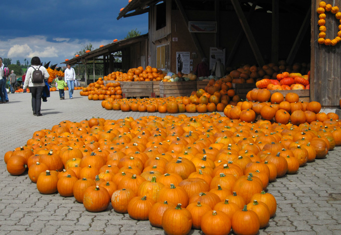 Jucker farm in Seegraben - pumpkin exhibition