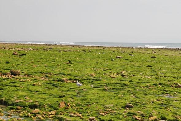 Low tide in Ile de Ré, Atlantic Coast in France