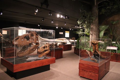 Museum of the Rockies, in the exhibition dinosaurs hall
