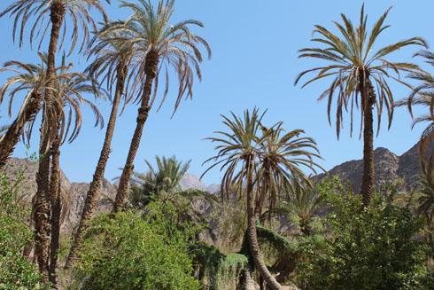 Oasis of Firan in the Sinai desert