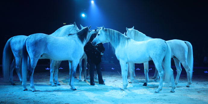 Purebred arabians at the Premiere of Circus Knie in Zurich