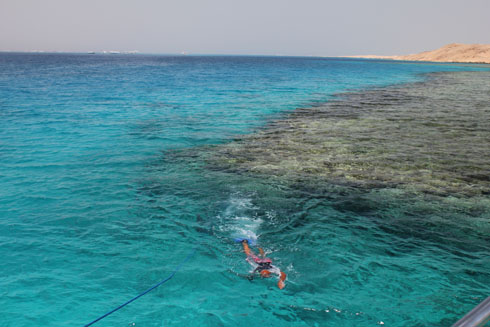 Swimming in the gulf of Aqaba