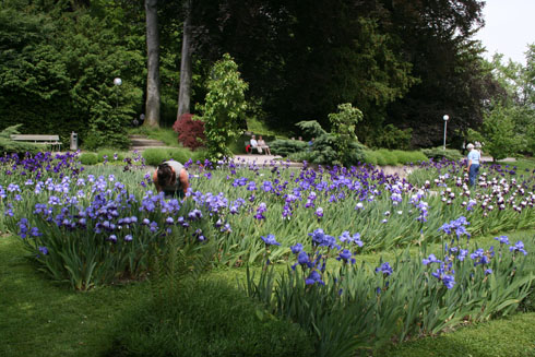 View of the Belvoir Park during the iris show