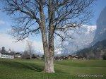 Grindelwald scenery