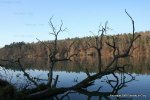 Reflecting Tree Rhine River
